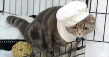 باحثون : أسلاف القطط الحالية في أوروبا تنحدر من مصر و تركيا