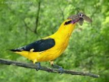 الهيئة الألمانية لحماية الطبيعة تخشى تلاشي الطيور والحشرات