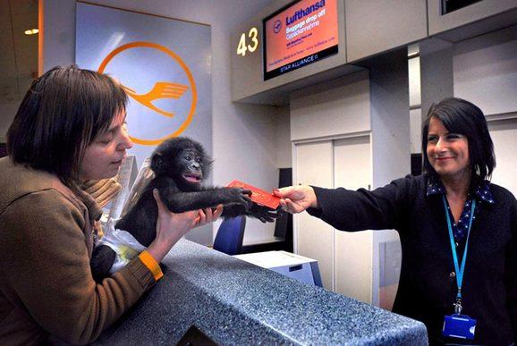 جوازات تقبلها القرود واخرى يرفضها الجميع