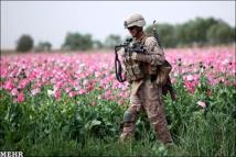 """وكالة أممية: جهود القضاء على الأفيون في أفغانستان """"لا تكاد تذكر"""""""