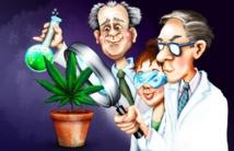 هل تبيح ألمانيا بيع الماريجوانا للجميع ، بعد تقنينها للاستخدام الطبي؟