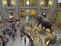 متاحف أمريكا والبحث عن الفن الهادئ بعيداً عن الحشود الصاخبة