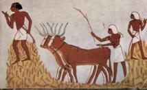 الفلاح المصري القديم