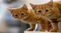 """لغز """"قاتل القطط"""" في بريطانيا يرعب أصحاب الحيوانات الأليفة"""