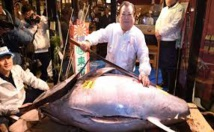 بيع سمكة تونة ضخمة مقابل 1ر3 مليون دولار في سوق السمك الجديد باليابان