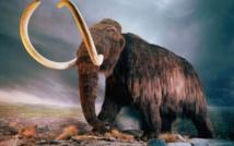 باحثون يكتشفون أكبر حيوان ثديي آكل للحوم في تاريخ الأرض