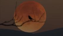 """""""قمر الفراولة"""" يخيم الجمعة على العالم"""