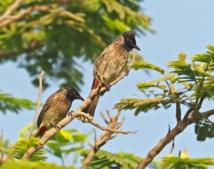كيف تشجع الطيور على الغذاء والتكاثر في حديقتك؟