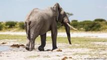 نفوق جماعي غامض لأفيال في بوتسوانا يربك السلطات بالبلاد