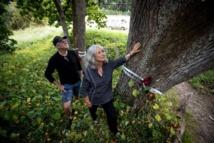 محتجون في نيوزيلندا يتصدون لإزالة أشجار عمرها 100 عام