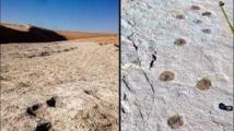 اكتشاف آثار أقدام لبشر وحيوانات  من 120 ألف سنة بالسعودية
