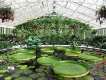 حدائق لندن الملكية... بيوت زجاجية رائعة تضم كنوزا من نباتات العالم