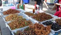 مع المخاوف من أزمة أمن غذائي تايلاند تطلق كتاباً عن كيفية تربية الحشرات تجارياً
