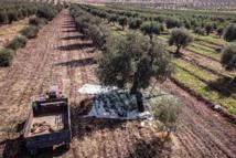 حكومة نظام الاسد  تسرق أراضي المعارضين السوريين