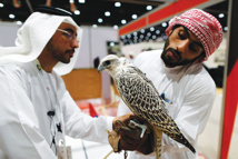 خليجيون يقتحمون الصحراء لصيد الطيور والحيوانات البرية بالذهب والفضة