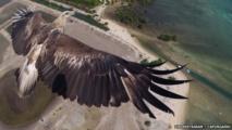 صورة لنسر تفوز بمسابقة للتصوير بالطائرات من دون طيار