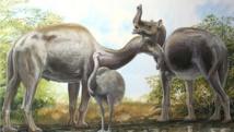 """أخيرا.. العلماء يحلون لغز """"الجمل الفيل"""""""