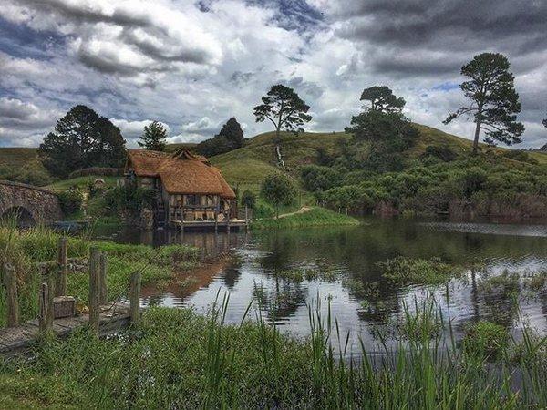 جزيرة كابيتي النيوزيلندية ... مقصد عشاق الطيور النادرة في العالم
