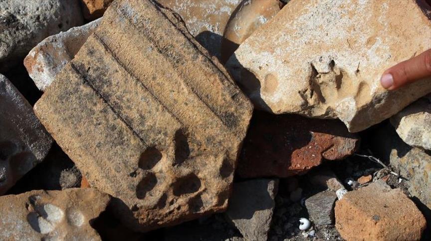 خبراء أتراك يعثرون على آثار حيوانات تعود للقرن الثامن الميلادي
