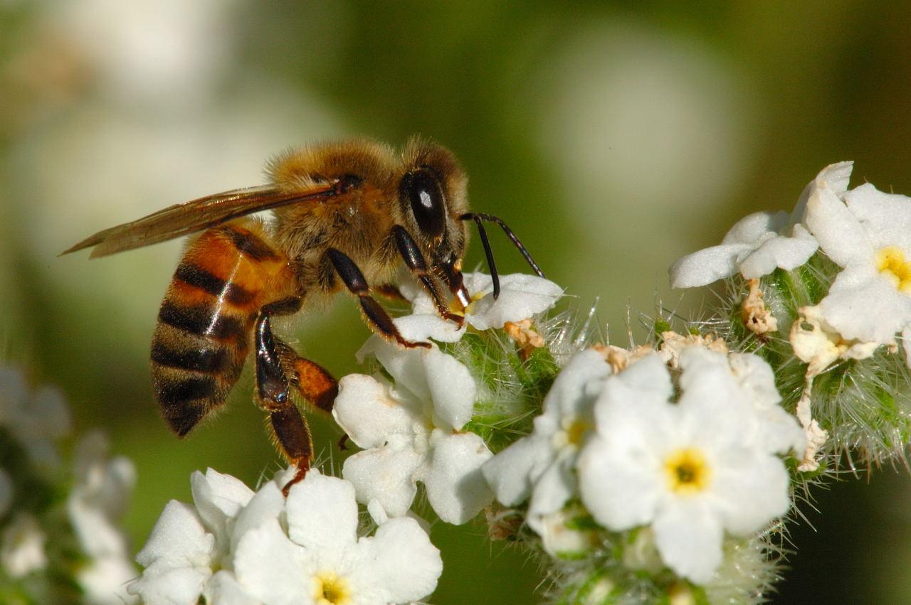 السجون الألمانية تستخدم النحل في مساعدة النزلاء على تعلم الصبر