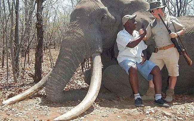 مؤتمر جنيف للحياة البرية يبحث وضع قيود على اصطياد الفيلة