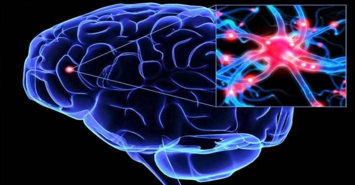 خلايا عصبية مسؤولة عن تخلص المخ من المعلومات غير الضرورية