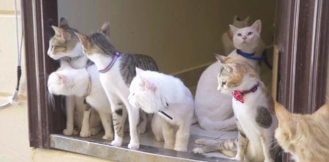 متطوعون أمريكيون يوفرون ملاذات آمنة للقطط الضالة