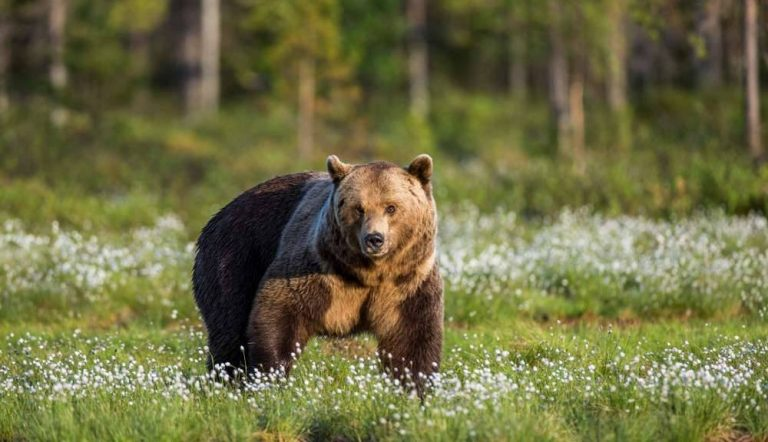 كرواتيا موطن الدببة وأكثر من مجرد سياحة شواطئ