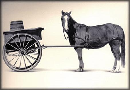 الخيول بدلا من السيارات لجمع القمامة في ضاحية بلجيكية