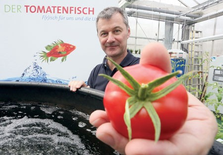 """فريق علمي ألماني يجري تجارب لاستزراع """"سمكة الطماطم"""" كبديل غذائي"""