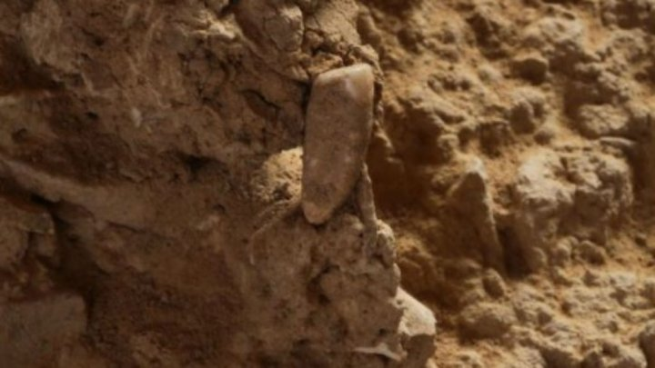 فرنسا: العثور على سن بشرية عمرها 560 ألف سنة