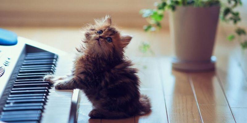 باحثون موسيقيون يكتشفون  موسيقى مفضلة عند القطط