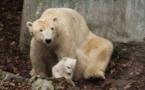 ذكر أم انثى؟ حسم غموض صغير الدب القطبي في حديقة حيوان برلين
