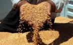 السعودية تستحوذ على ثلث التجارة العالمية للشعير