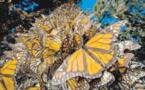 تجربة لتتبع مسار الفراشات للتعرف على تفاصيل حياتها العجيبة