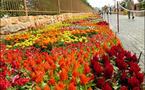 مهرجان الزهور الألماني .. يجذب أكثر من مليون سائح خلال الربيع و الصيف