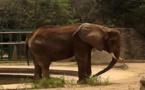 فيلة فنزويلية تخسر 2000 كيلوجرام من وزنها بسبب  نقص الغذاء