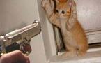 سلطات ميامي تعتقل شابا يحترف قتل القطط