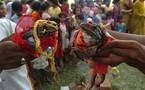 تزويج ضفدعين في الهند في احتفال تقليدي لتعجيل سقوط الأمطار الموسمية