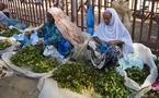 القات في إثيوبيا بين انتقادات الإدمان والحفاظ على موروث تقليدي