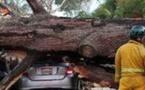 اثنا عشر قتيلا و50 جريحاً بسقوط شجرة خلال مهرجان بالبرتغال