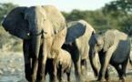 موقع إنترنت لترجمة الأصوات البشرية إلى لغة الفيلة