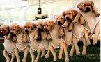 حتى كلاب دمشق باتت بحاجة الى علاج نفسي و شراستها من سوء المعاملة كما يقول روبير