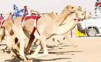سباقات الهجن في سلطنة عمان..موروث شعبي يراعي حقوق الأطفال
