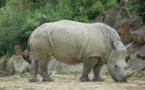 نفوق آخر ذكر من حيوان وحيد القرن الأبيض الشمالي بكينيا