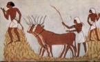 الفلاح حظى بمكانة متميزة في مصر  الفرعونية