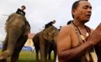إلغاء بطولة بولو الأفيال الخيرية في تايلاند للأبد بسبب انتهاكات