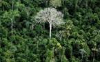 زوجان يكافحان لإنقاذ غابة الامازون المطيرة من الزوال
