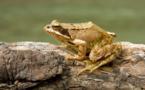 برمائيات الإكوادور ثروة من التنوع البيئي مهددة بالانقراض