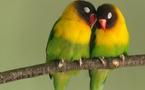 دراسة علمية أميركية تكشف عن خيانة الطيور المغردة لأزواجها
